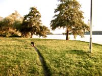 Wunderbare Spazierwege, auch mit Hund - Bild 16: Berlin XXL Apartment an der Badewiese Toplage *WLAN* Hunde